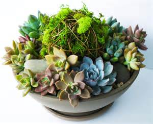 how to make a succulent planter diy vibrant succulent planter kelley and cricket