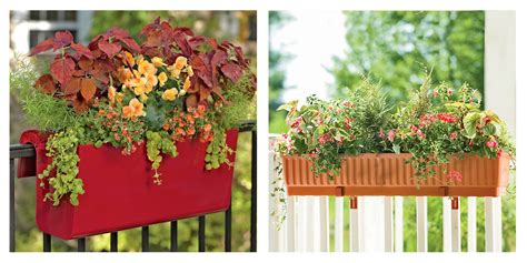 Flowers For Planter Boxes by 9 Best Window Boxes For Summer 2017 Window Boxes And