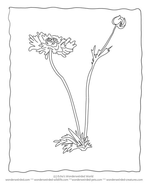 botany coloring pages az coloring pages