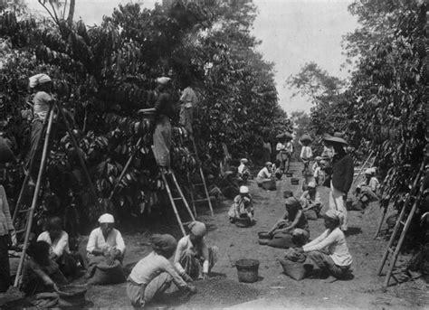 membuat karya kolase tentang tanaman padi membuat karya kolase tentang tanaman padi perkebunan kopi