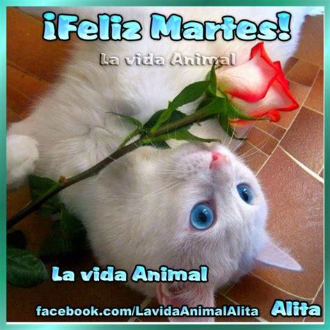 imagenes feliz martes animales lindos gatitos con frases lindas de buenos dias en