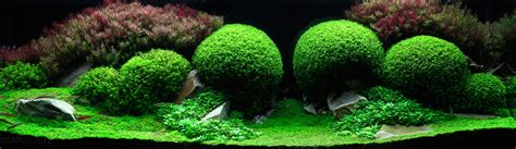 Most Beautiful Aquascapes by The Underwater Of Competitive Aquascaping