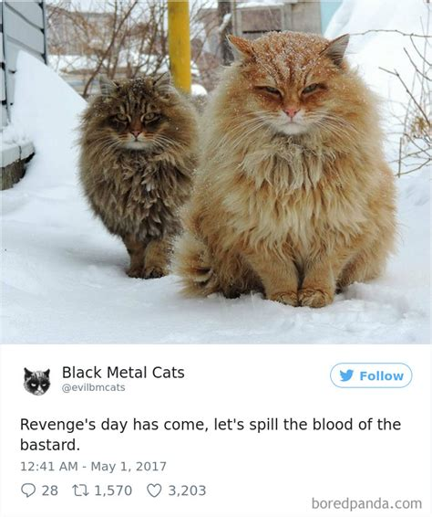Metal Cats account pairs cat pics with metal lyrics and it s