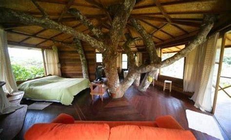 tree inside house tree inside house home decor and design