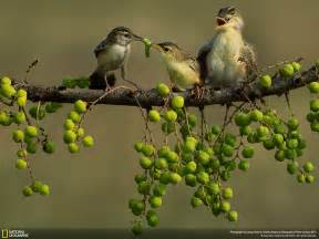 contest for 2014 national geographic photo contest 2014 foto natura