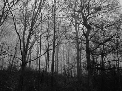 free stock photo of black and white hd wallpaper hiking scary woods free stock photo public domain pictures