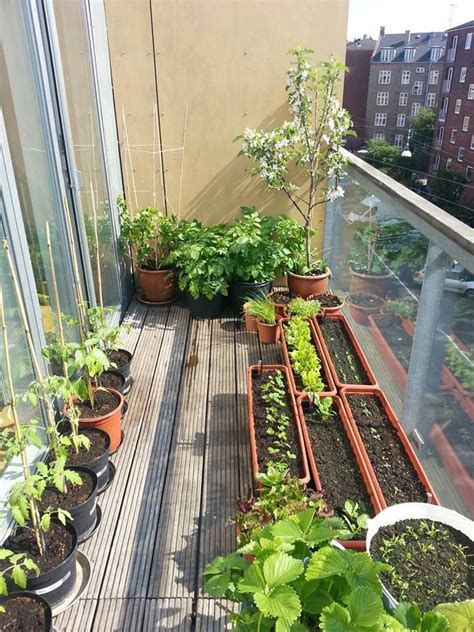 Apartment Deck Plants 25 Best Ideas About Balcony Garden On Small