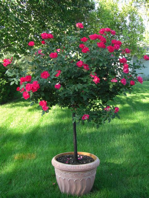 flowering trees how to choose fast growing trees
