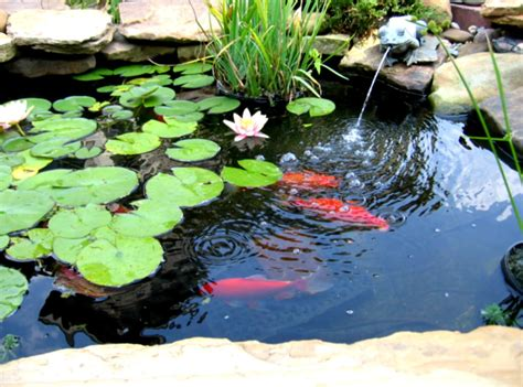Pond Decor by Diy Waterfall Pond Ideas Water Gardens Ideas Goodhomez