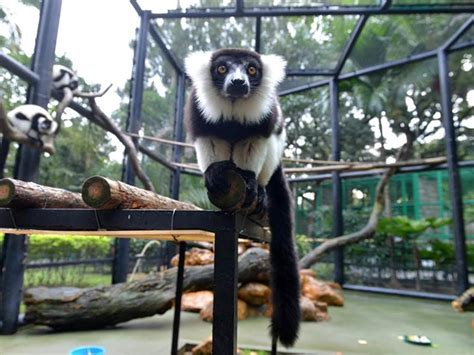 hong kong zoological  botanical gardens home