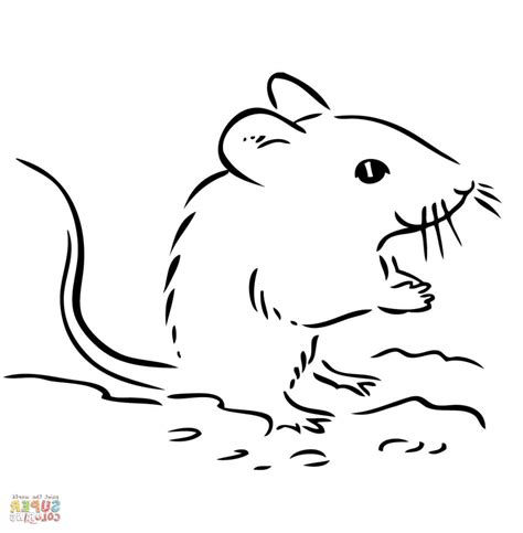 deer mouse coloring page mice easy coloring pages