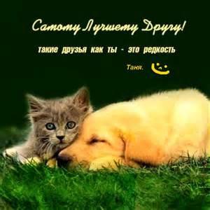 хорошие картинки котики