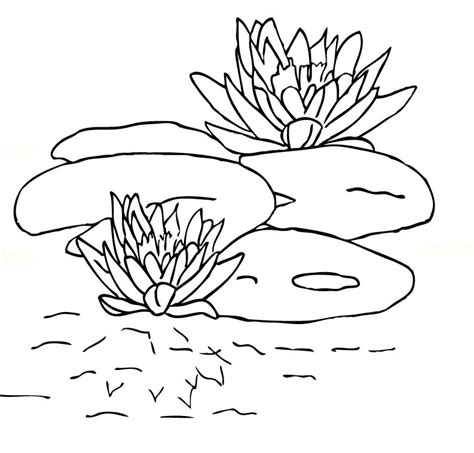 imgs for gt lily pad coloring pages