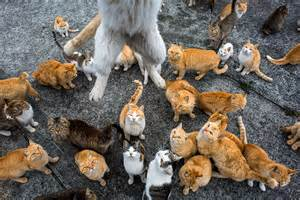 cat island in japan japan s cat island a visit to aoshima where cats