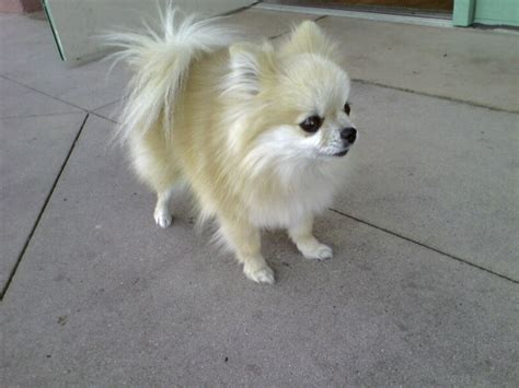 medium sized dogs that don t shed medium sized dogs that shed pet photos gallery ookbqvyked