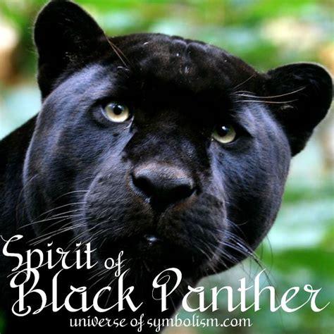black panther symbolism black panther spirit animal meaning