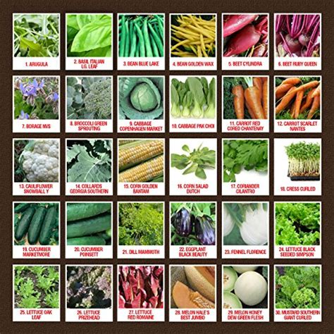 Vitamin San B Plex list of por garden vegetables garden ftempo