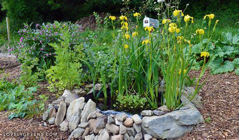 how to make a small pond in your backyard how to build a small pond for the garden lovely greens