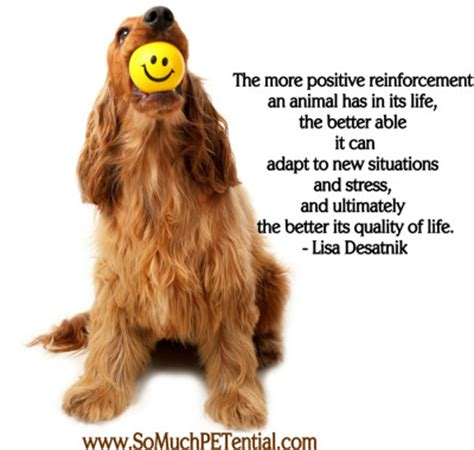 how much is obedience for dogs positive reinforcement so much petential
