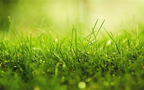Grass Wallpapers High Quality   Download Free