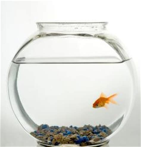 printable pet coupons  tetra aquarium products