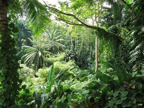 Borneo Cewe by Tropischer Regenwald Im Sonnenschein Foto Bild World