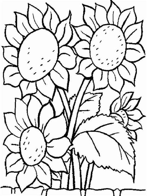 Sunflower Coloring Pages Download And Print Sunflower Sunflower Coloring Pages