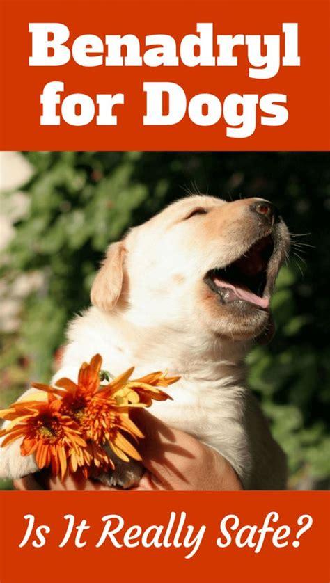 benedryl dose for dogs best 25 benedryl for dogs ideas on benadryl