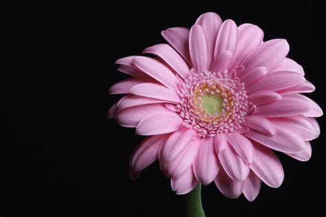flower photography flowers photography by almaskari on deviantart