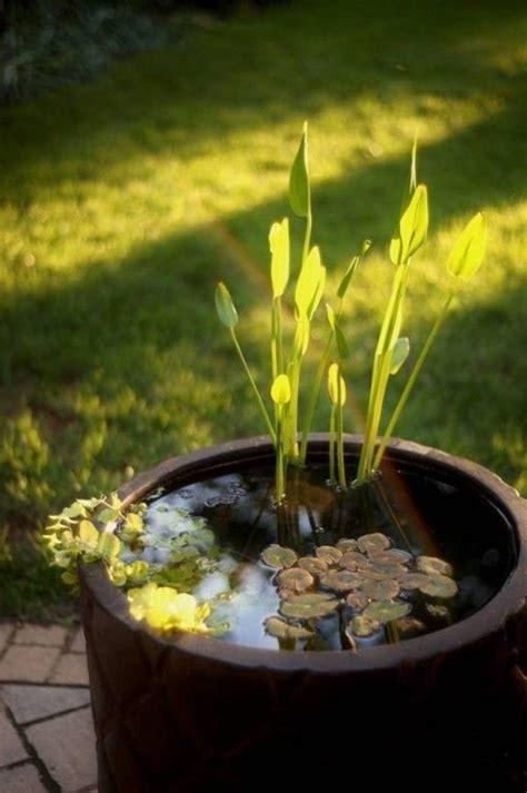 Water Container Garden Ideas Ideas Of Water Garden Containers Decor Ideas