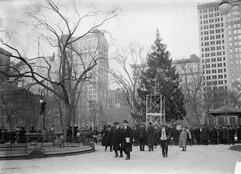 when does christmas start in new york trees archives watters garden center