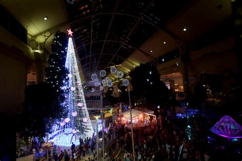 australian christmas tree sets world record with 518 838