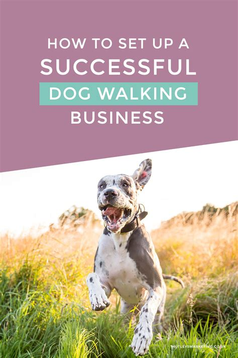 how many sets of do puppies need how to set up a successful walking business