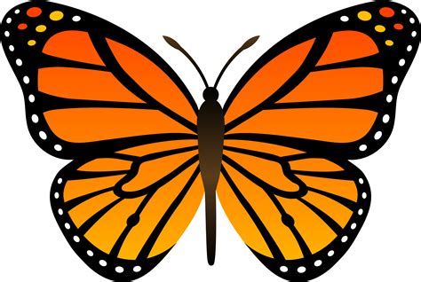 butterflies images orange butterfly png image butterflies free
