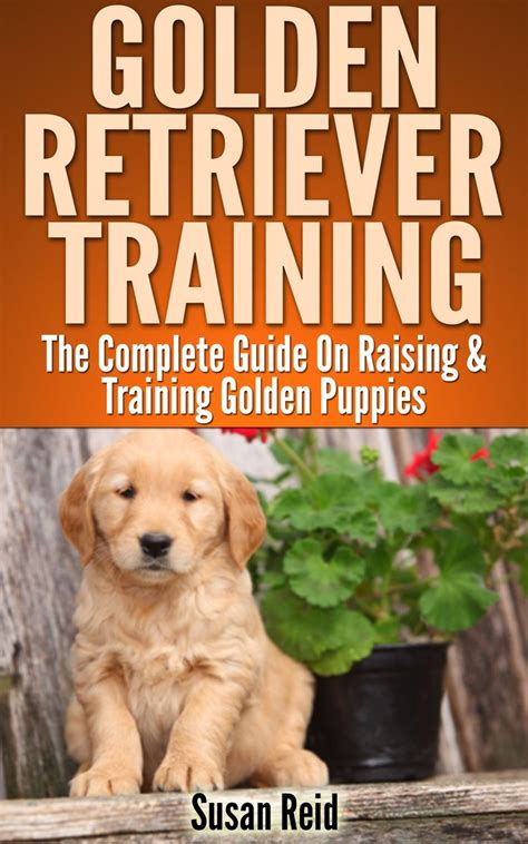 how to care for a golden retriever 25 best ideas about golden retriever on golden pupper