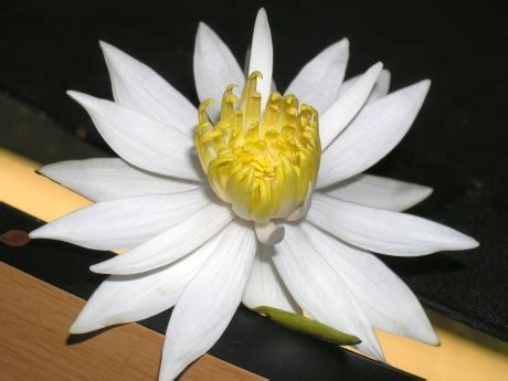 Pflanzen Im März 5152 by Aquarium Merope