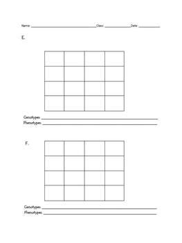 Punnett Square Template by Punnett Squares Blank Templates By Vicki The Science