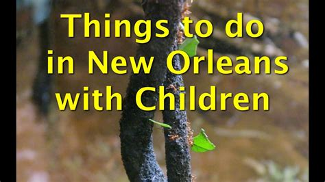 things to do with children in new orleans audubon butterfly garden and insectarium