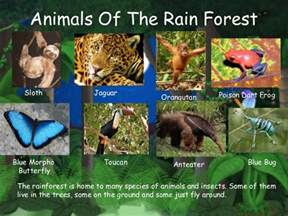 Plants And Animals Found In Tropical Rainforests - major rainforest regions