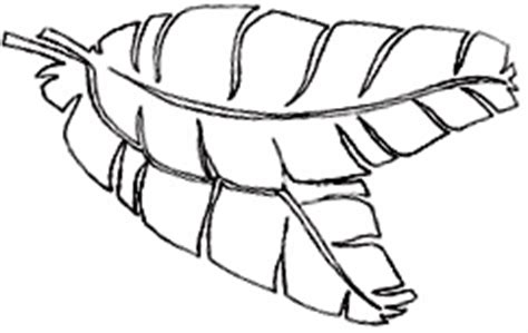 banana leaf coloring page product listing africa