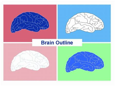 brain template brain outline