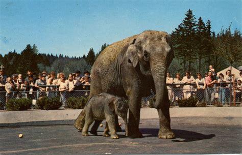 asian elephant page  oregon zoo
