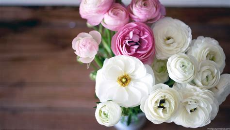 buttercup ranunculus bouquet flowers white pink buds