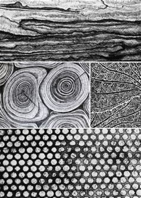patterns in nature ks2 pen drawing of natural forms inspired by ernst haeckel by
