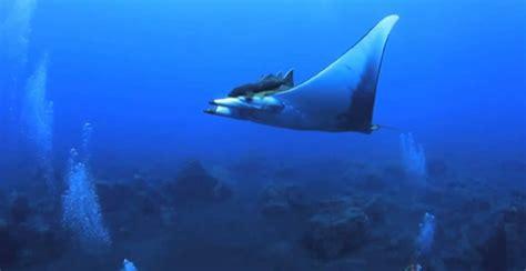 imagenes de unicornios marinos espectaculares fondos marinos en el hierro youtube