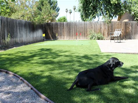 do dogs need grass backyard synthetic lawn grass for dogs elk grove california