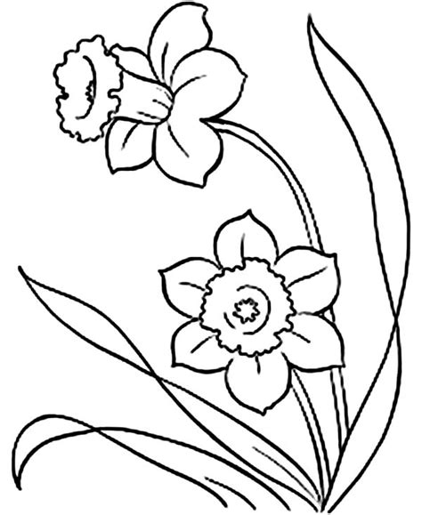 coloring pages daffodil flowers picture of daffodil flower coloring page netart