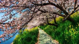 Beautiful Spring Flowers - free 4k backgrounds pixelstalk net