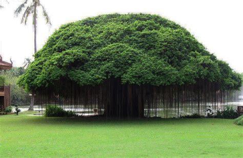 Trees From Around The World by 10 225 Rvores Que Parecem De Outro Mundo