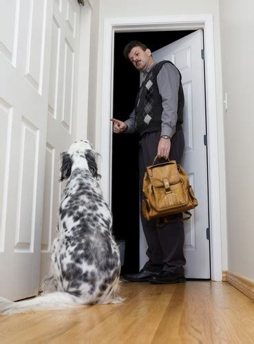 how to deal with separation anxiety in dogs how to deal with separation anxiety in dogs top tips
